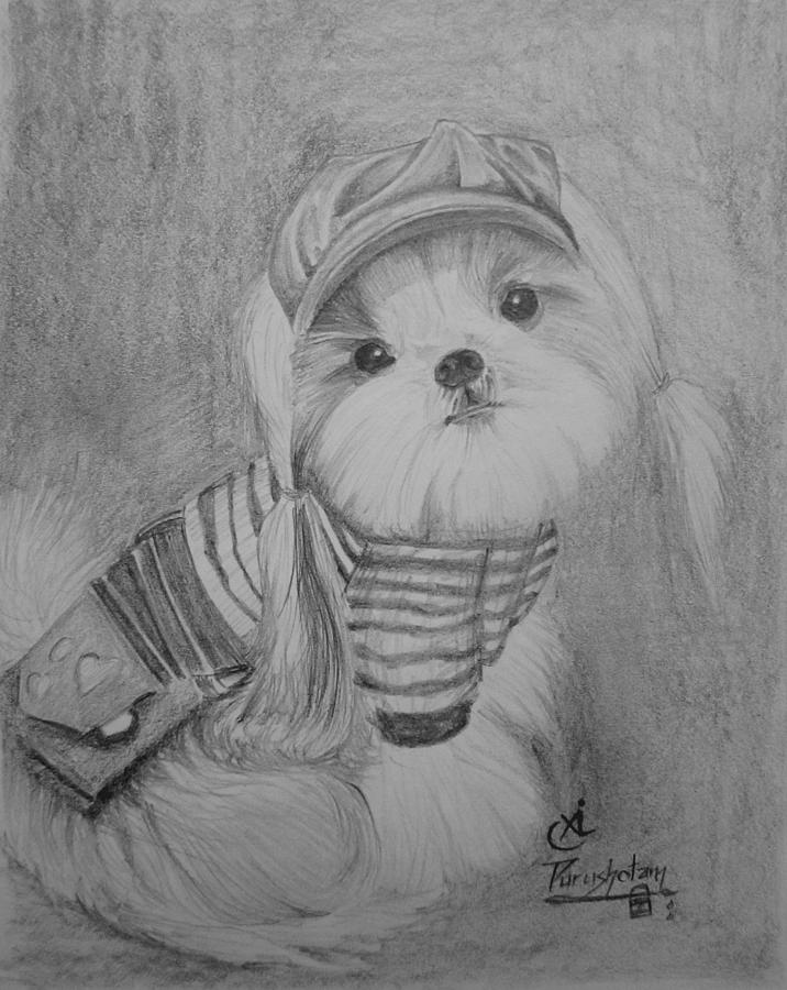 Pencil sketch of cute puppy by purushotama anil kumar