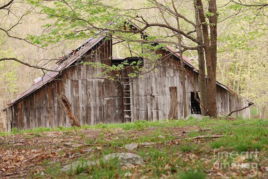 Pendleton County Photograph - Pendleton County Barn by Randy Bodkins