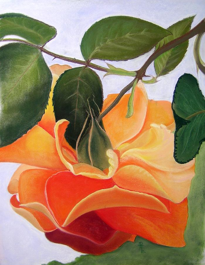 Orange Rose Pastel - Penelope by Rosemarie Temple-Smith