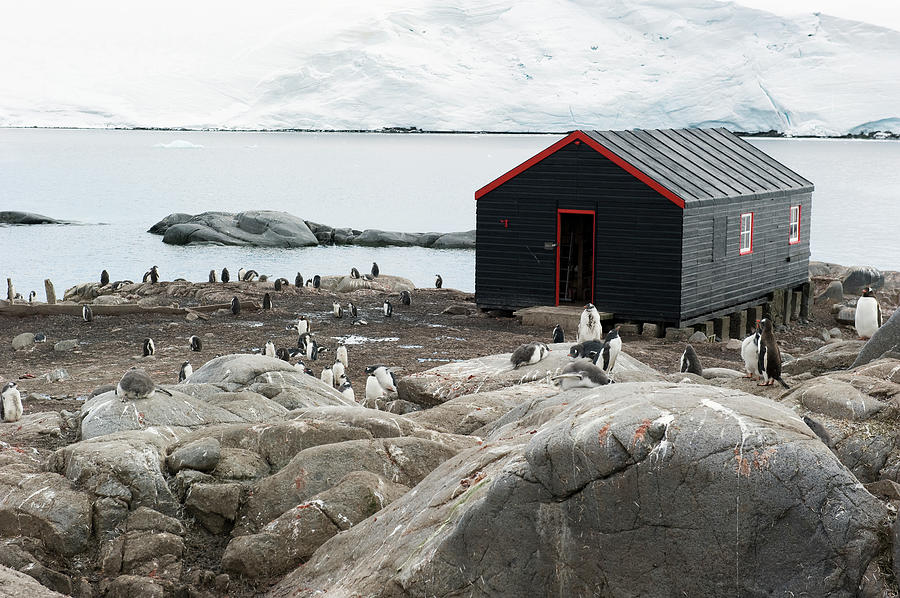 Penguins Around A Black Building On The Photograph by Jim Julien / Design Pics
