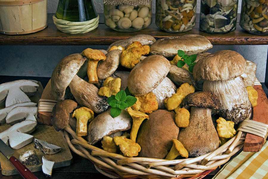 Assortment Photograph - Penny Bun, Cap (boletus Edulis by Nico Tondini