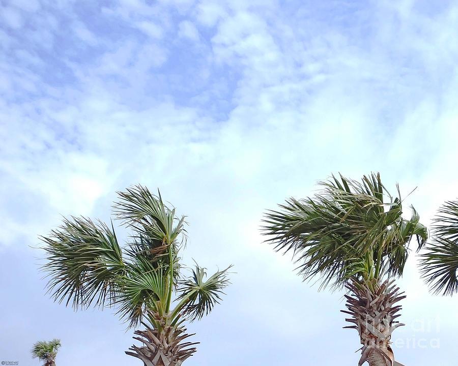 Palm Tree Photograph - Pensacola Palms by Lizi Beard-Ward