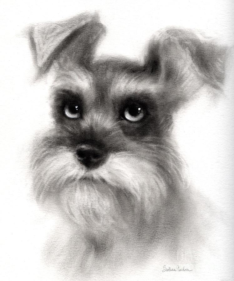 Schnauzer  - Pensive Schnauzer Dog Painting by Svetlana Novikova