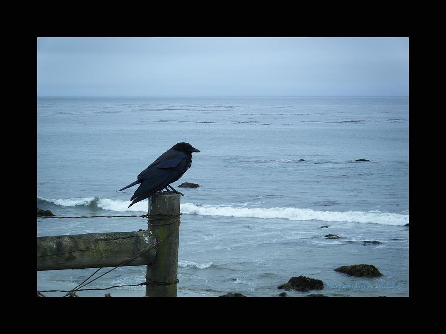 Ocean Photograph - Pensive by Tamara Kulish