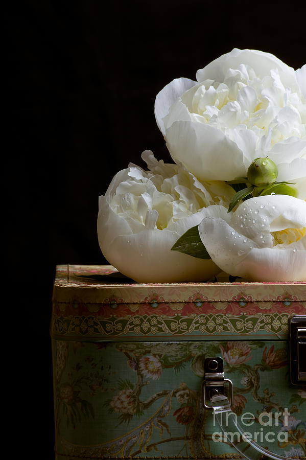 Hat Photograph - Peony Flowers On Old Hat Box by Edward Fielding
