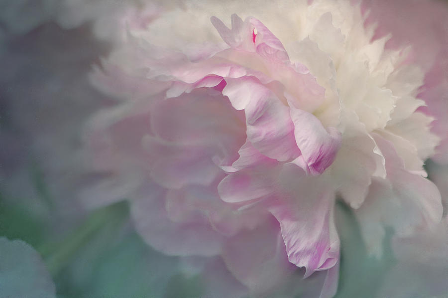 Flower Photograph - Peony by Jeff Burgess