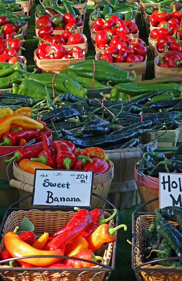 Pepper Photograph - Pepper Alley by Steph Maxson