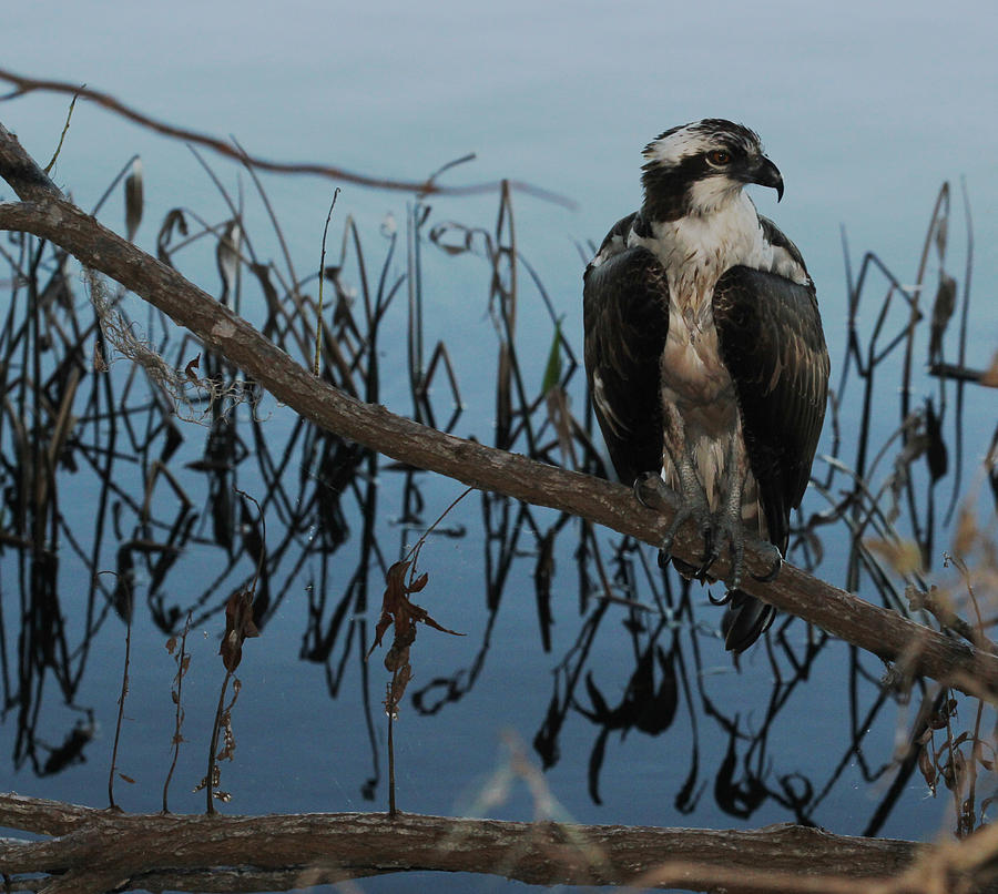 Bird Photograph - Perched by April Wietrecki Green