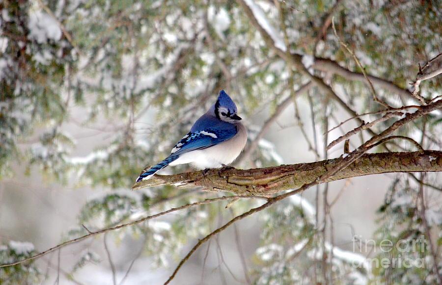 Bird Photograph - Winter Blue by Jaunine Roberts