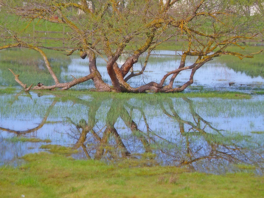 Water Reflection Digital Art - Perched by Devalyn Marshall