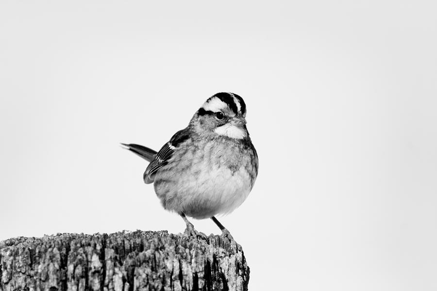 Perched Photograph - Perched On A Post by Nathaniel Kidd