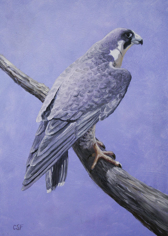 Bird Painting - Peregrine Falcon by Crista Forest