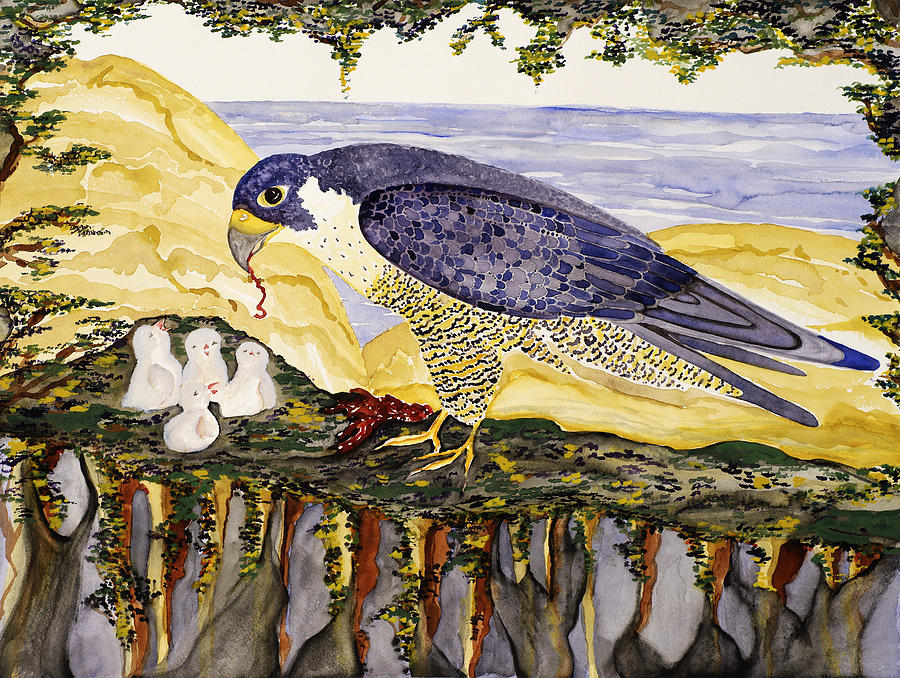 Peregrine Falcon Feeding Chicks Painting by Alexandra  Sanders