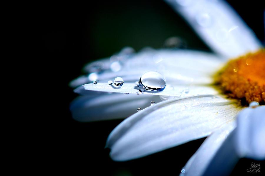 Simple Photograph - Perfect Drop by Lisa Knechtel