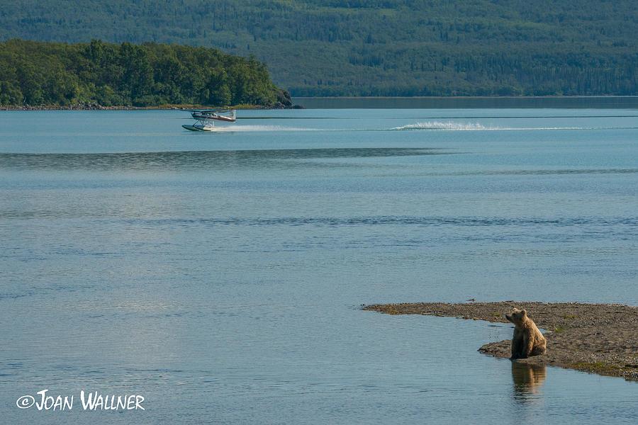 Alaska Photograph - Perfect Landing by Joan Wallner