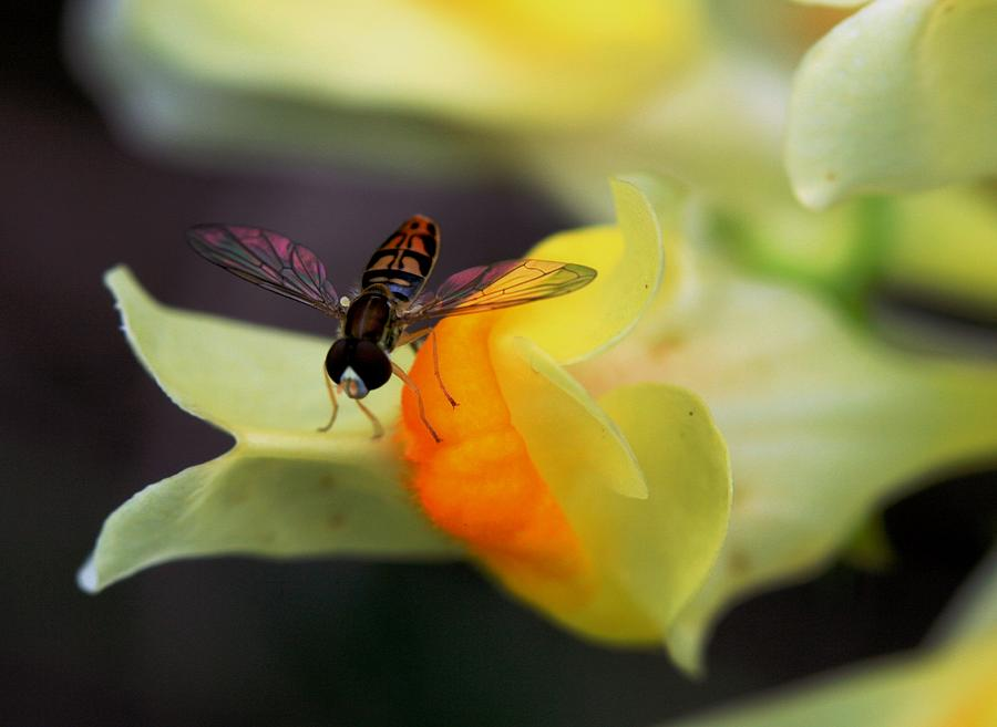Flower Photograph - Perfect Landing by Lisa Vaccaro