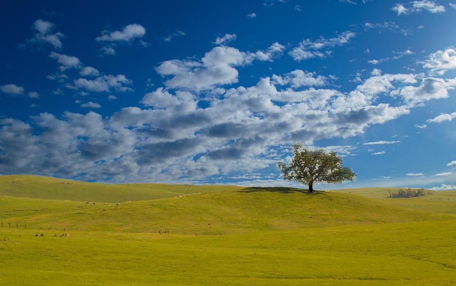 Landscape Photograph - Perfect Landscape by Rima Biswas