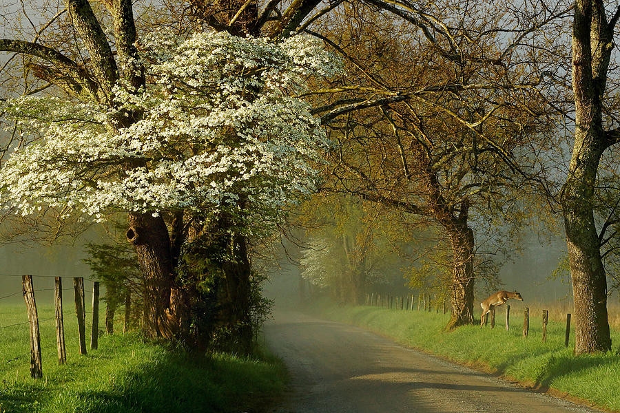 Cades Cove Photograph - A Perfect Morning by Deb Campbell