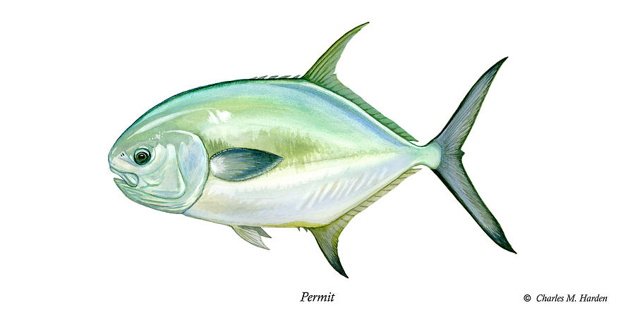 Charles Painting - Permit by Charles Harden