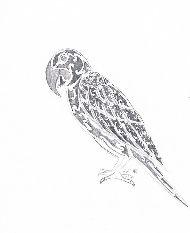 Pencil Drawing - Perrot  by Kali Kardsbykali