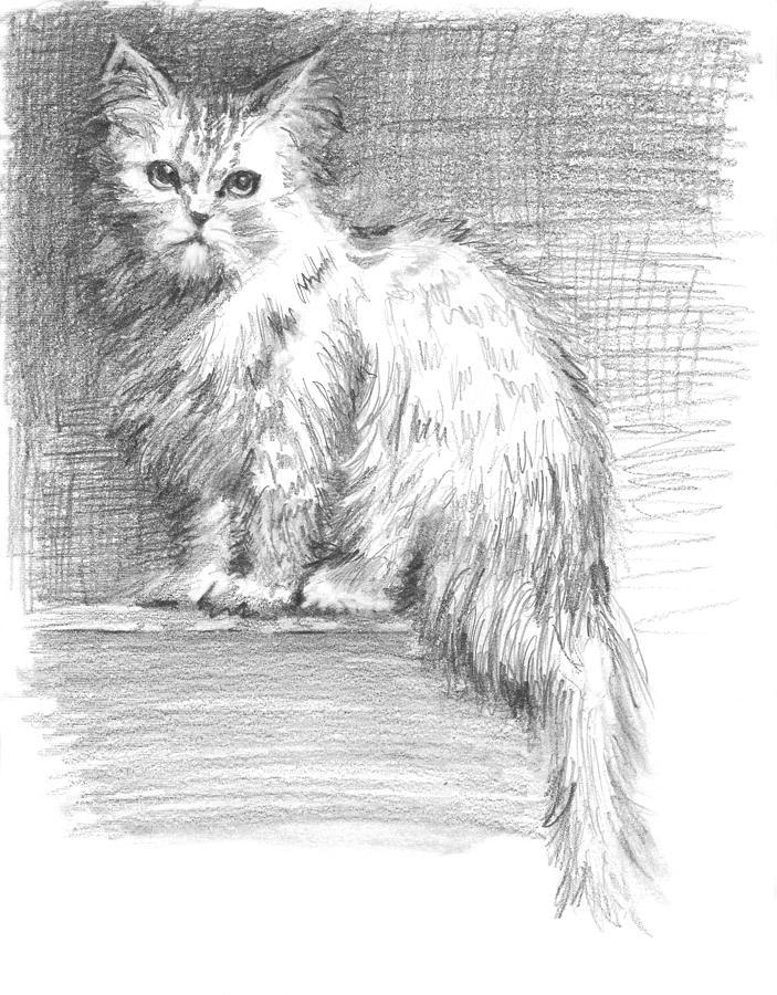 Persian Cat Drawing - Persian Cat by Sarah Parks