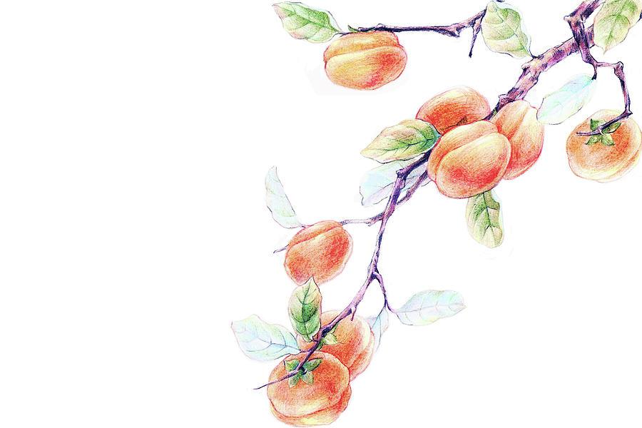 Persimmon Tree Digital Art by Bji / Blue Jean Images