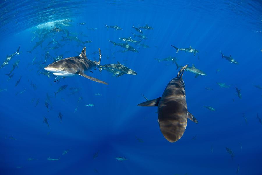 Sportfish Photograph - Perspective by David Valencia