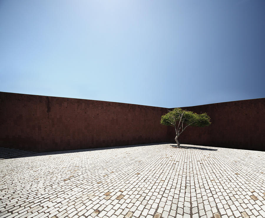 City Photograph - Perspective View On Square With Tree by Stanislaw Pytel