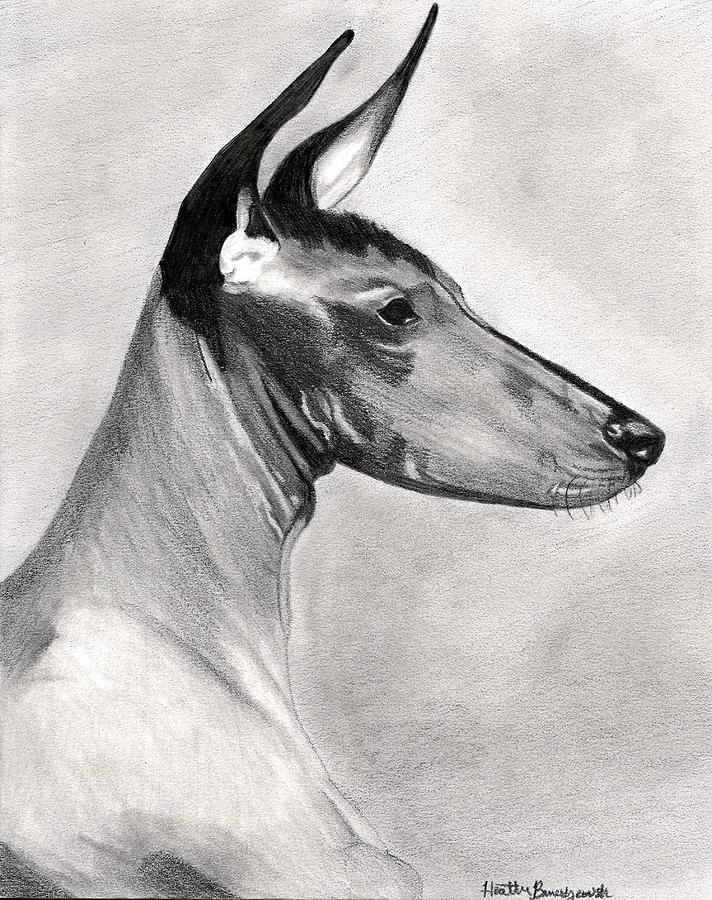 Peruvian Inca Orchid Dog Drawing - Peruvian Inca Orchid Dog by Olde Time  Mercantile