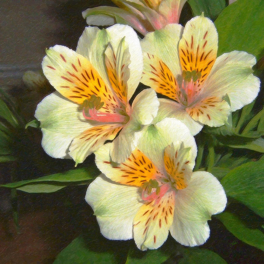 Peruvian lily alstroemeria painting by dean wittle peruvian painting peruvian lily alstroemeria by dean wittle izmirmasajfo