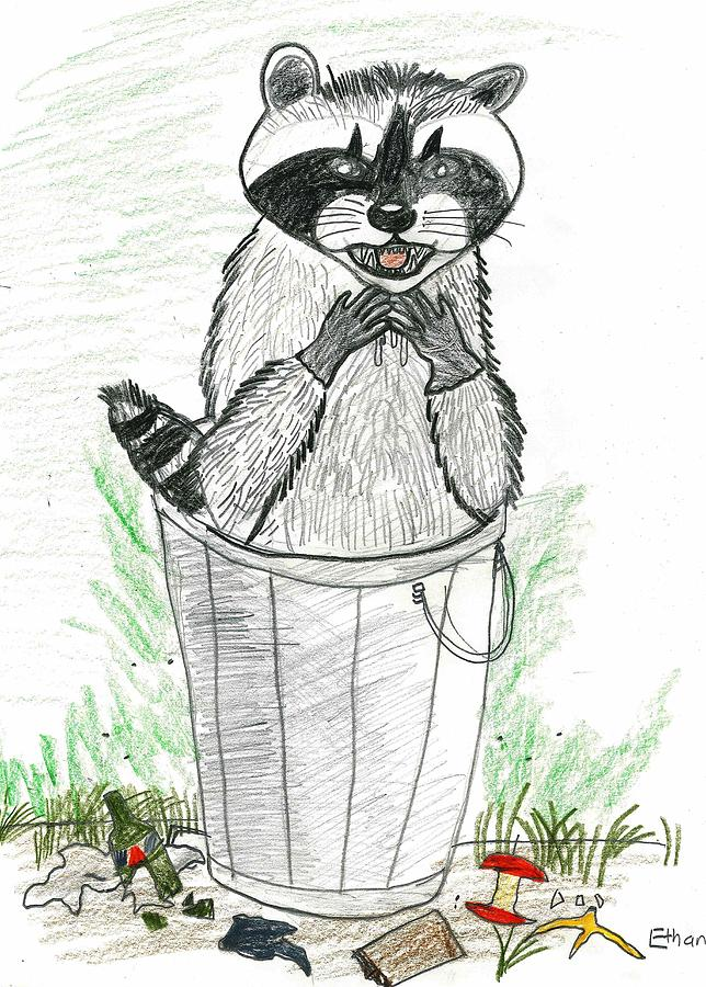 Raccoon Drawing - Pesky Raccoon by Ethan Chaupiz
