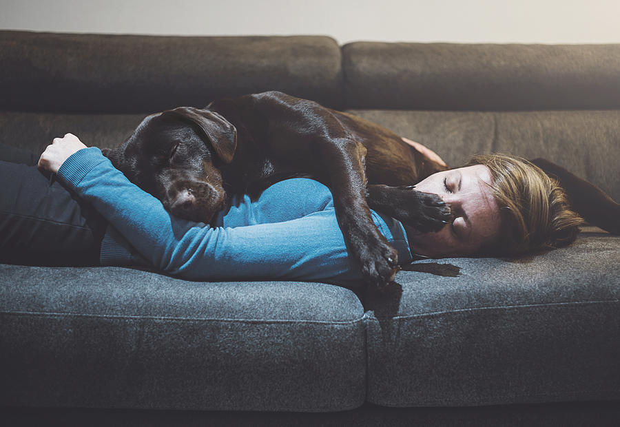 Pet dog asleep on woman Photograph by Justin Paget