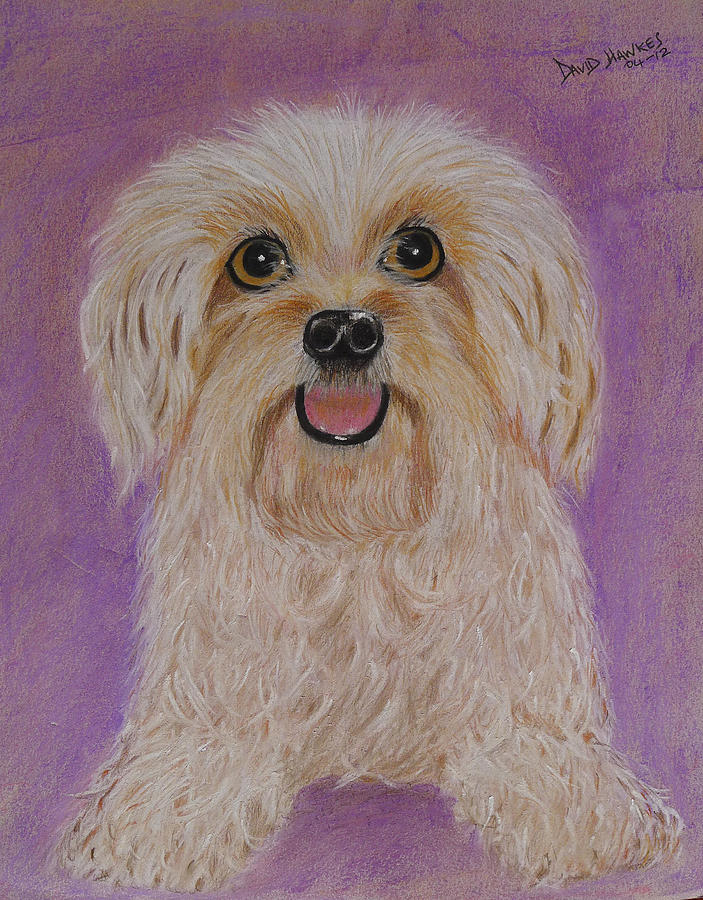 Terrier Painting - Pet Dog by David Hawkes