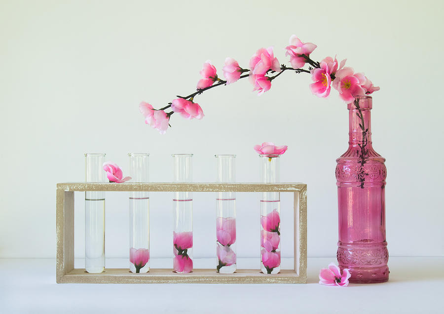 Pink Photograph - Petal Collecting by Jacqueline Hammer