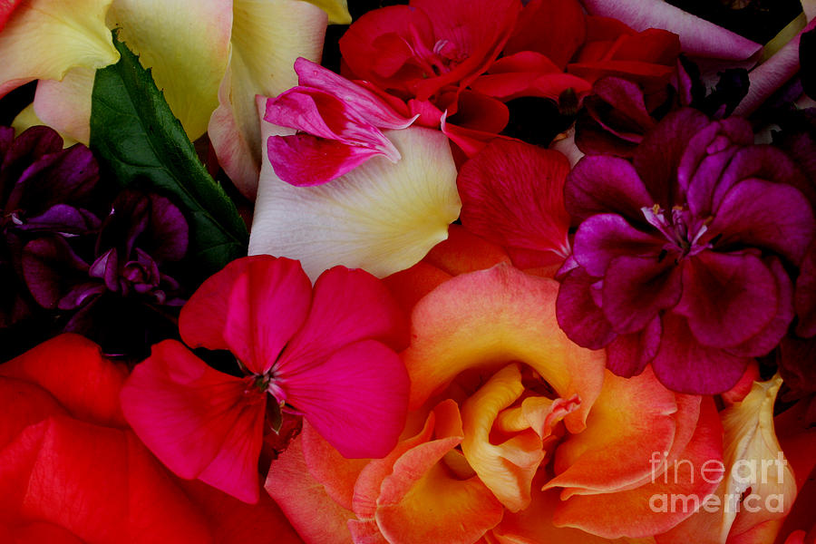 Photography Photograph - Petal River by Jeanette French
