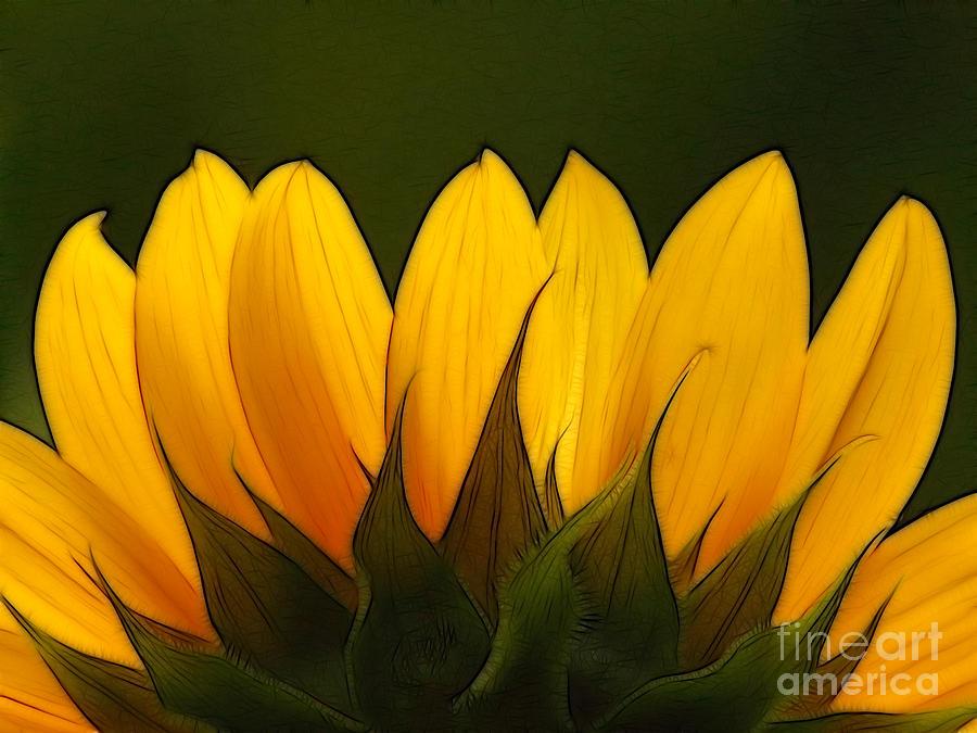 Sunflower Photograph - Petales De Soleil - A01 by Variance Collections