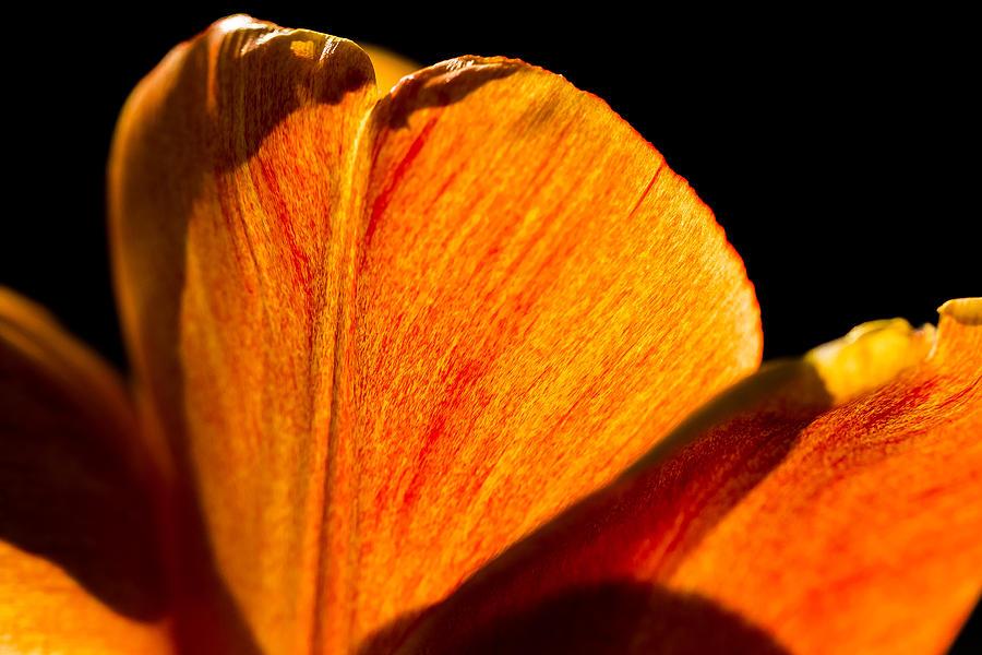 Bloom Photograph - Petals And Sun by Gaurav Singh