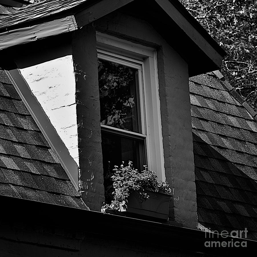 Petals In The View - Black And White Photograph