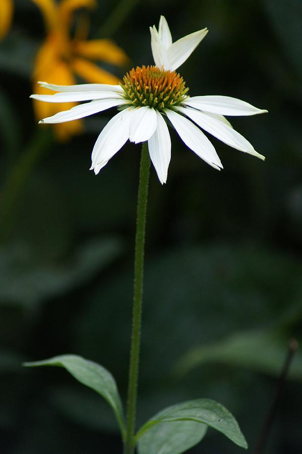Flowers Photograph - Petals by Joe Bledsoe