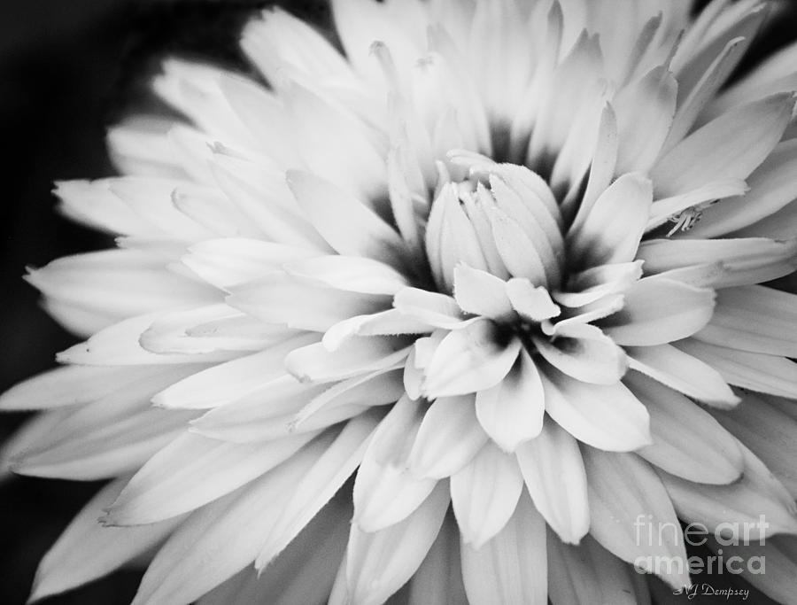 Flowers Photograph - Petals by Nancy Dempsey