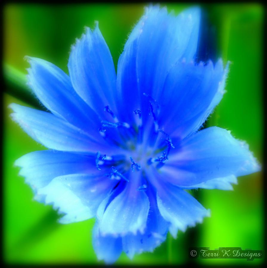 Green Photograph - Petals Of Blue by Terri K Designs