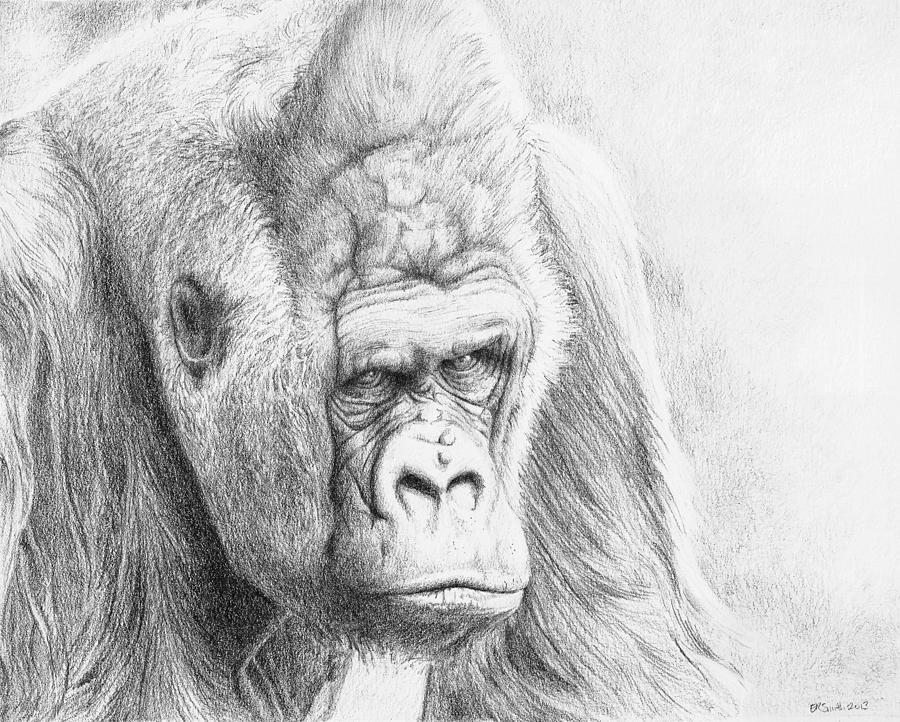 Gorilla Drawing - Pete by Elizabeth R Smith