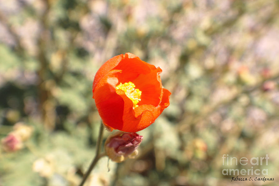 Desert Photograph - Petite Tangerine by Rebecca Christine Cardenas