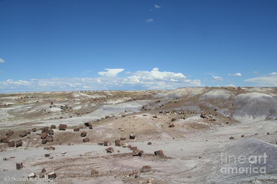 Desert Photograph - Petrified Forest by Susan Herber