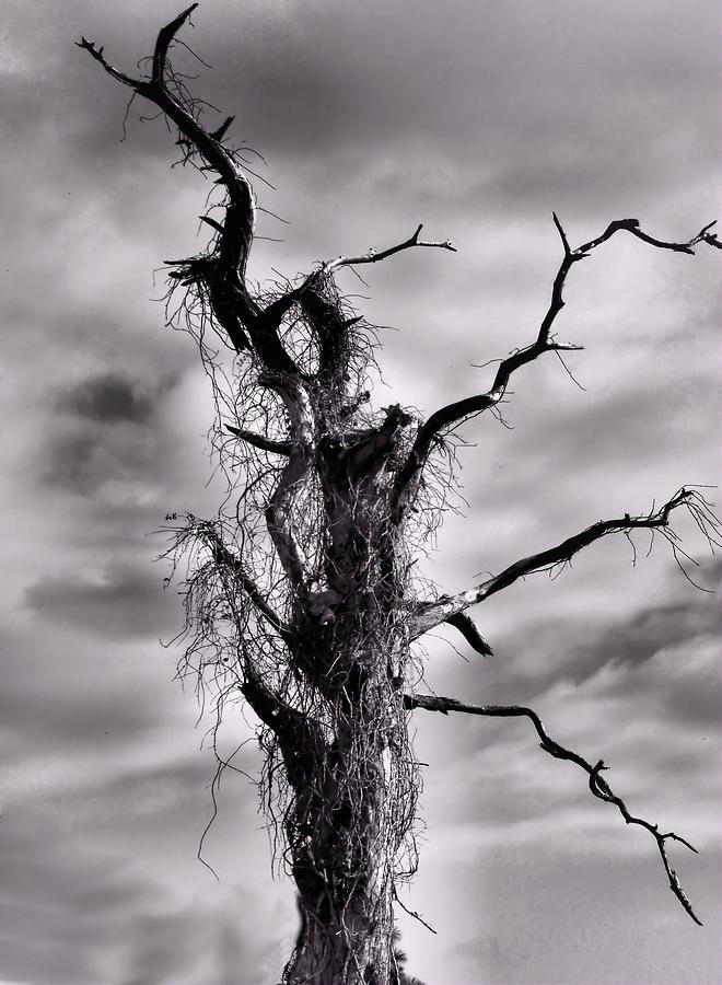 Tree Photograph - Petrified Tree by Rosalie Scanlon