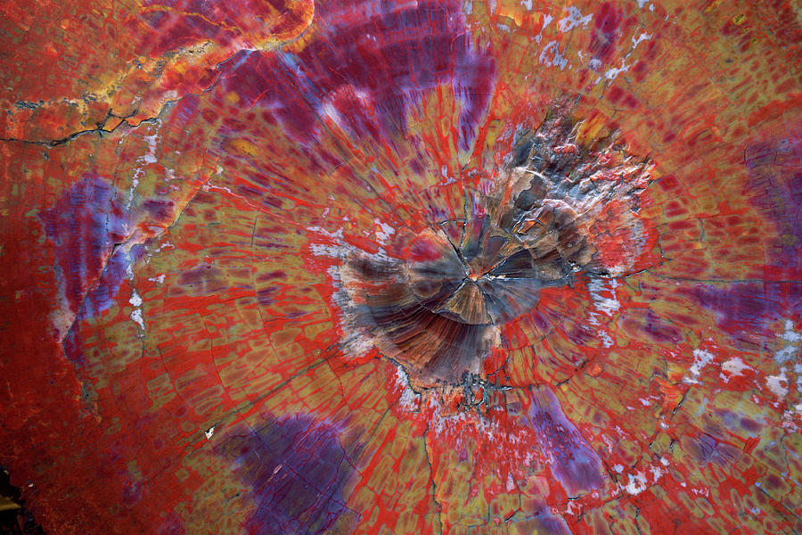 Petrified Wood Detail Photograph by
