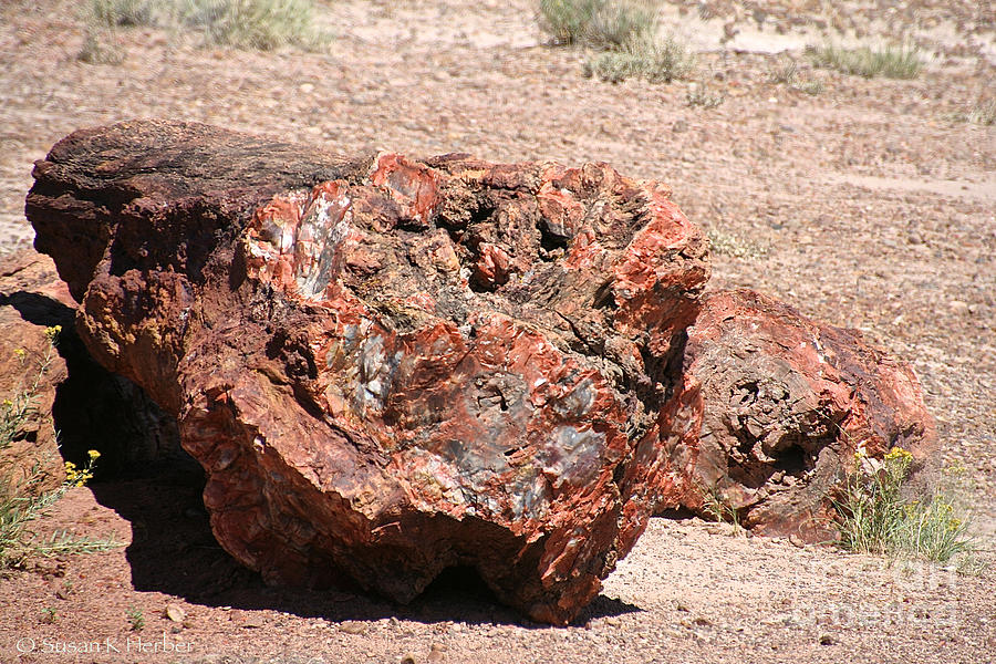 Outdoors Photograph - Petrified Wood by Susan Herber
