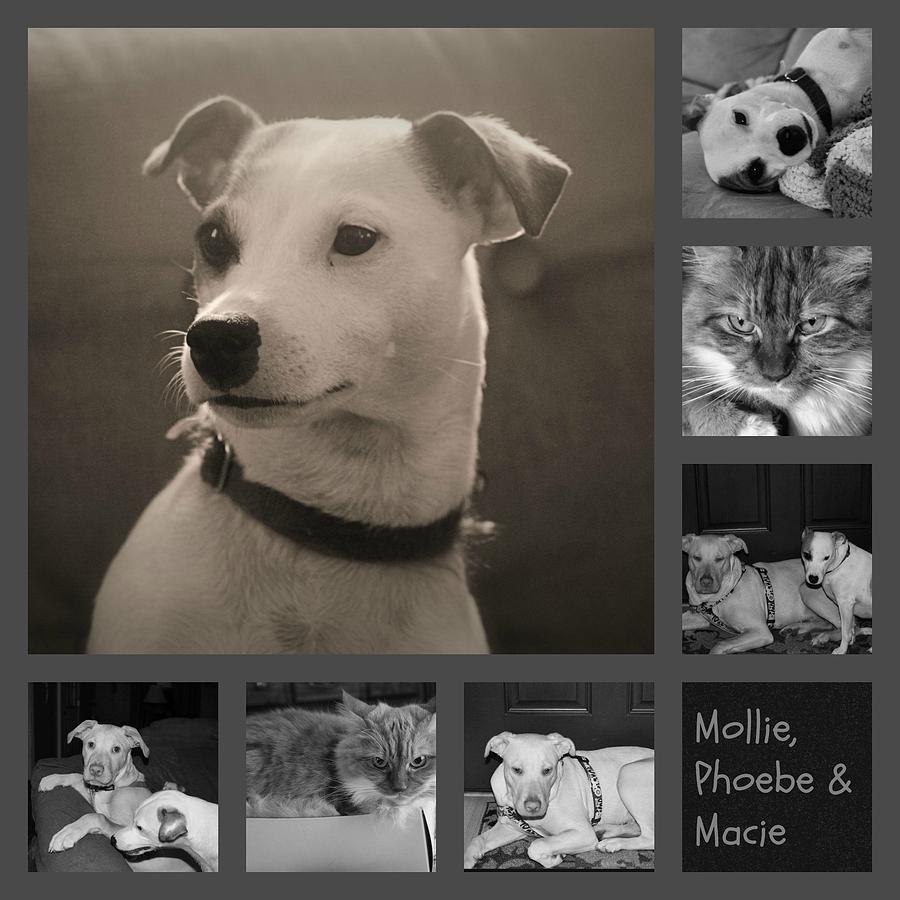 Dog Photograph - Pets Collage by Carolyn Ricks