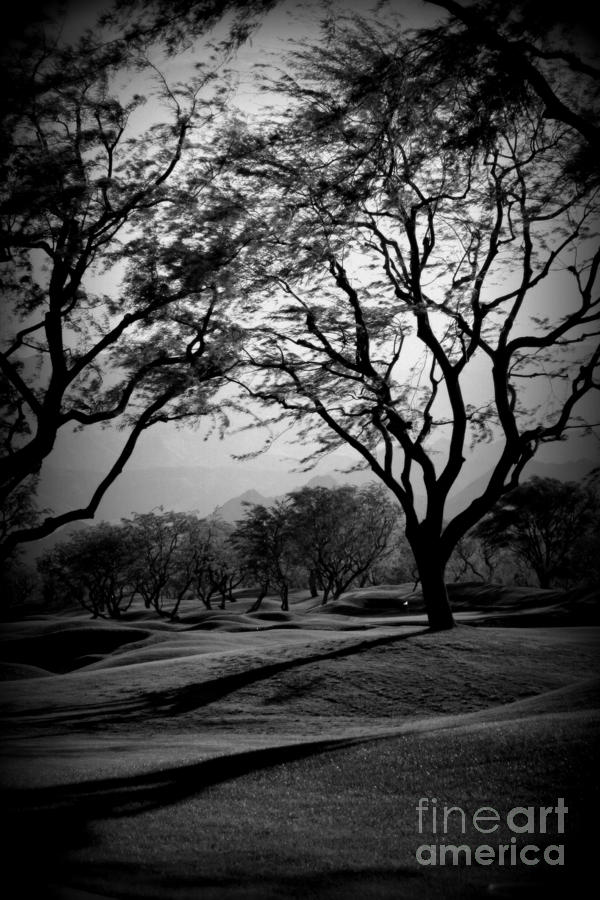 PGA West - Black and White by Tracy Evans