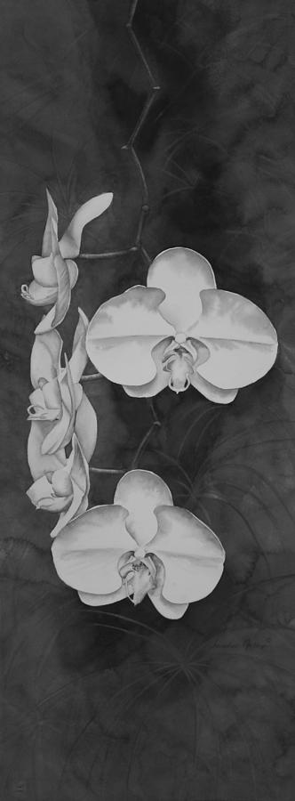 Black And White Painting - Phalaenopsis Beauty in Contrast by Heather Gallup